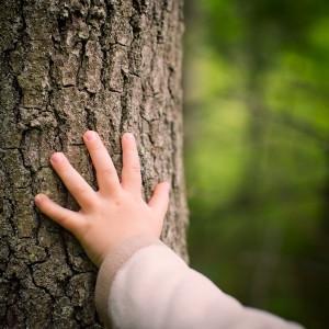 Hand eines Kindes an einem alten Baumstamm
