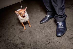 Haushund in kurioser Kleidung.